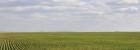 Winter Wheat Update #1, Central Russia 2014